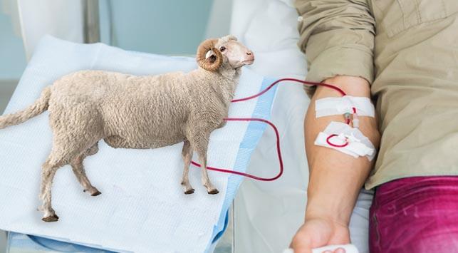 Donor Darah Manusia dengan Hewan Berakibat Fatal, Begini Sejarah Donor Darah
