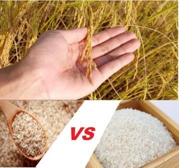 beras putih beras cokelat; kandungan gizi; manfaat beras putih coklat merah; rice; penderita diabetes; nasi; pecah kulit; beras putih; beras organik; padi; panen; brow rice; diet; bestprofit; harga; coklat; lebih baik; lebih sehat;