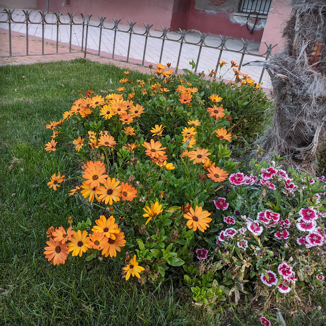 Flores Madirex