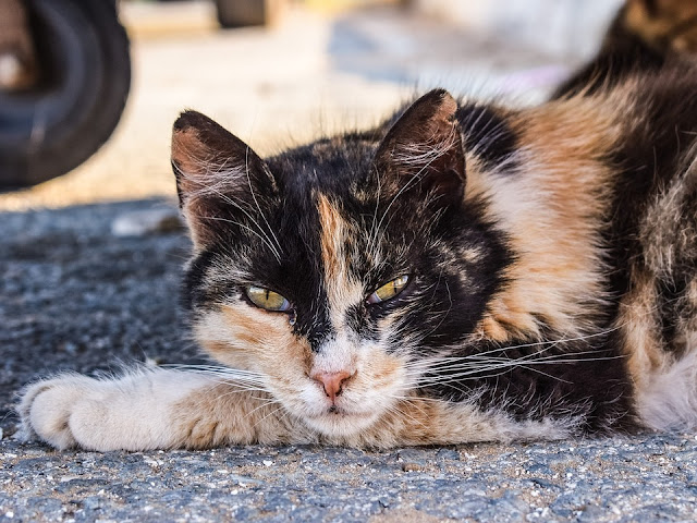 Spaying in Cats | VCA Animal Hospital