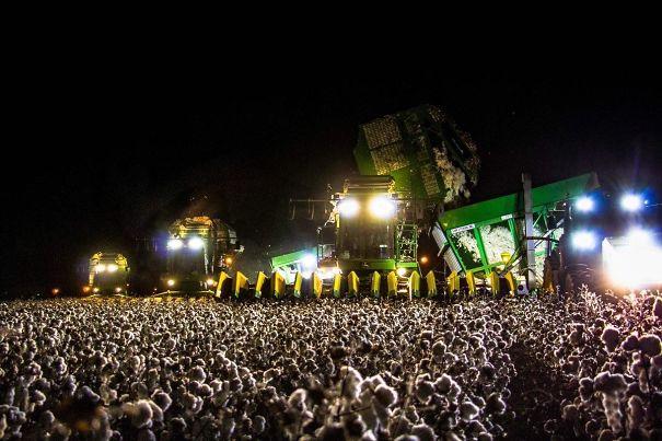Esta multidão enorme concerteza é realmente um selecionador de algodão a noite