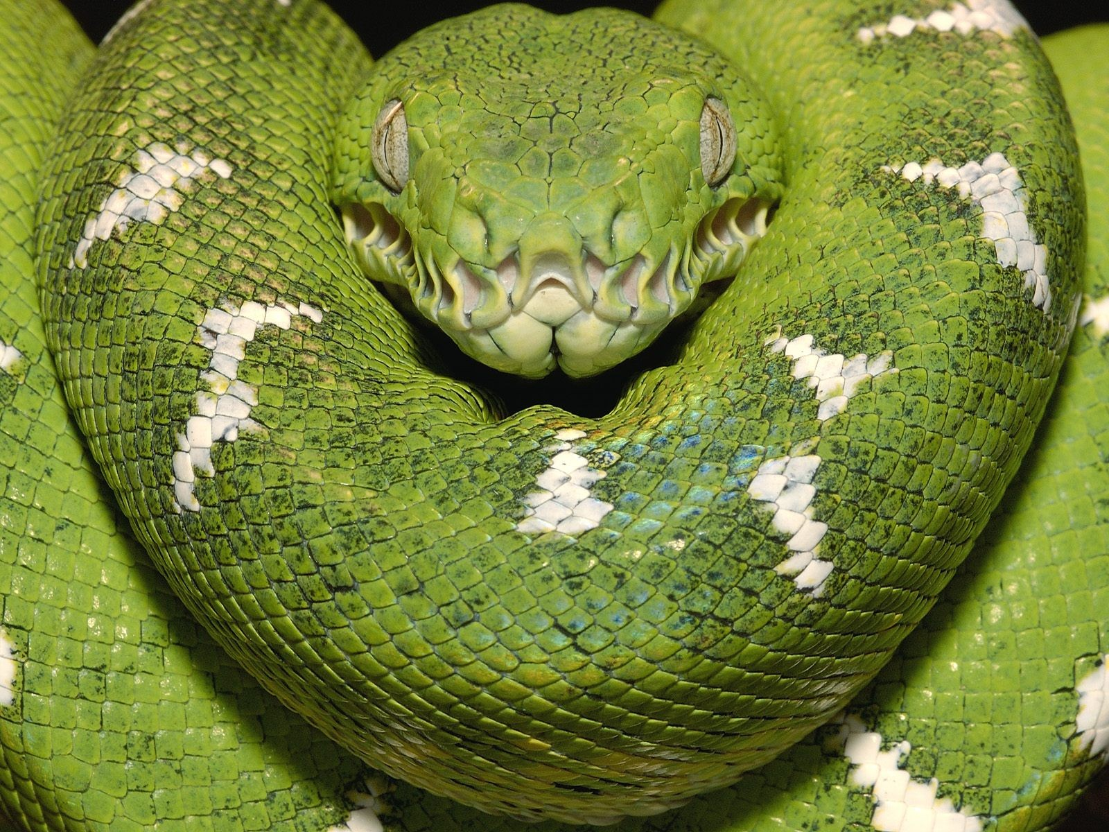 World Most Dangerous Snakes: Top 5 Most Venomous snakes in ...