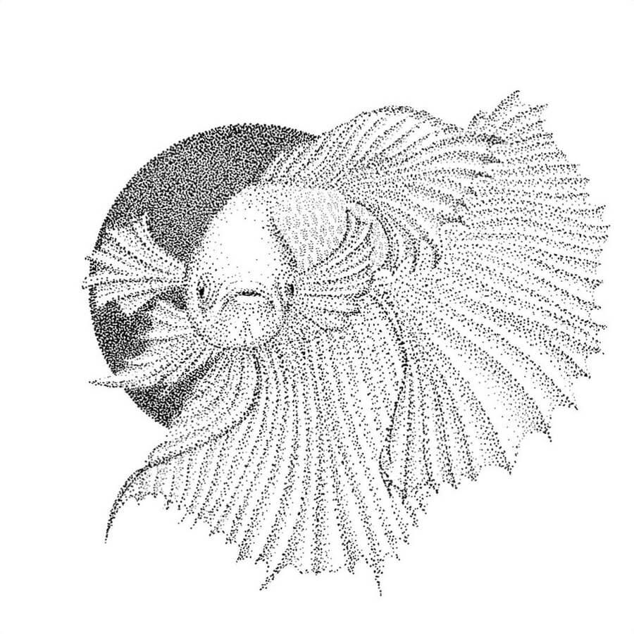07-Siamese-fighting-fish-Maria-Lecanda-www-designstack-co