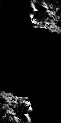 خلفيات صور اسد لهاتف سامسونج، آيفون، هواوي، هونر، اوبو، شاومي، موتورولا، نوكيا، إنفينيكس، سوني، وان بلس