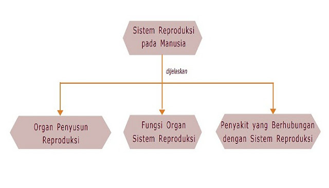 Peta Konsep Sistem Reproduksi Pada Manusia - Kelas 9