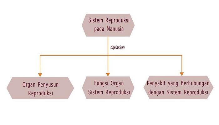 Sistem Reproduksi Pada Manusia - Kelas 9