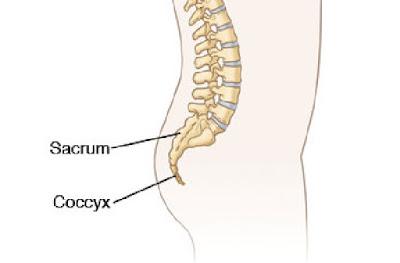 tulang panggul menjadi satu dengan tulang ekor dan sacrum