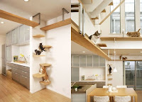 Cats on cat-shelves and walkways  | Exclusively Cats Veterinary Hospital, Waterford, MI