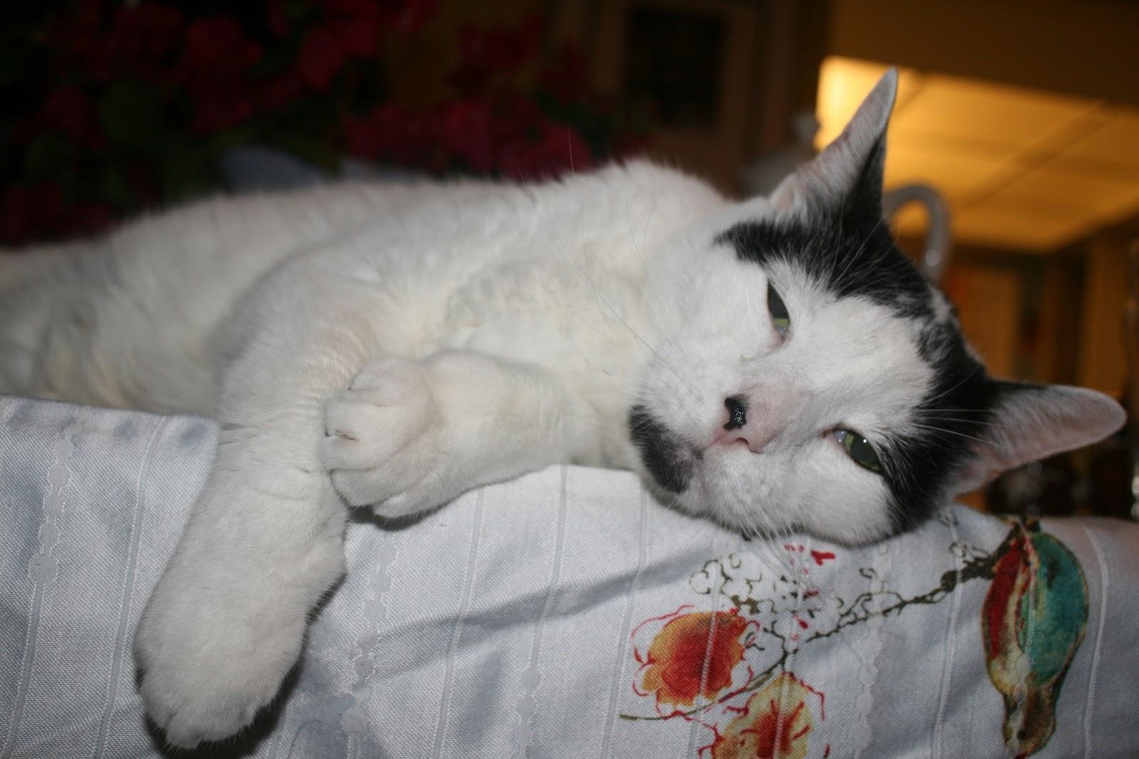 Why is My Cat so Sad?: 2017