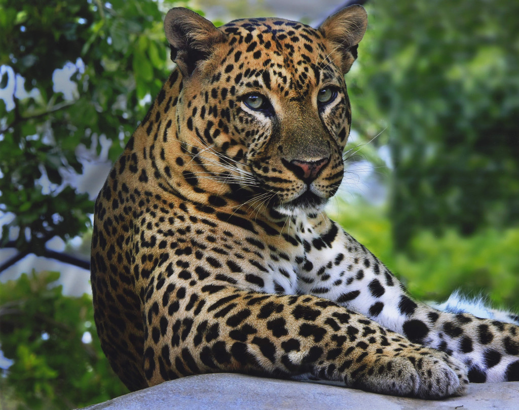 Hd Animal Wallpapers Wild Life Wild Animals High: Free Latest Full HD Quality Desktop Wallpapers: Latest