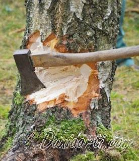 Arti Mimpi Menebang Pohon Menurut islam
