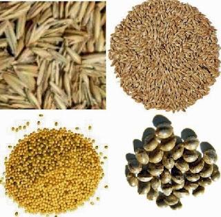 makanan-kenari-biar-gacor-keras,makanan-kenari-juara,sayuran-untuk-kenari-dan-manfaatnya,buah-untuk-kenari,