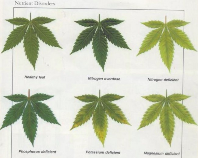 Leaf Illustrations And Charts To Help Diagnose Plant Nutrient