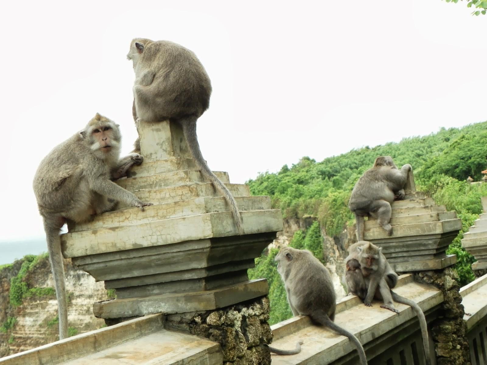 Wisata Bali-2