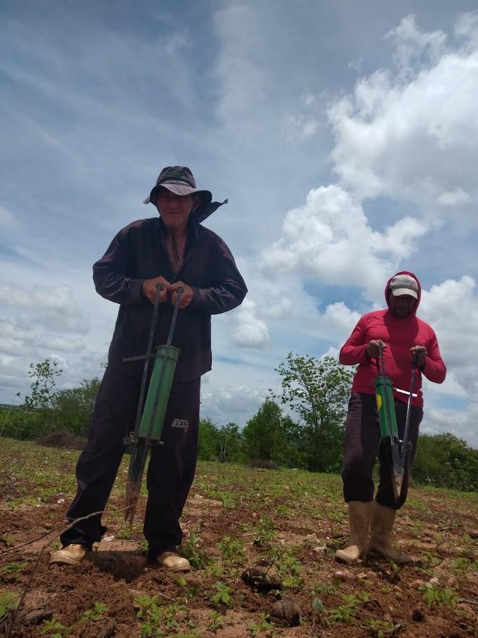 Com chuvas na região do Curimataú agricultores de Cubati se animam  e começam o plantio de milho e feijão