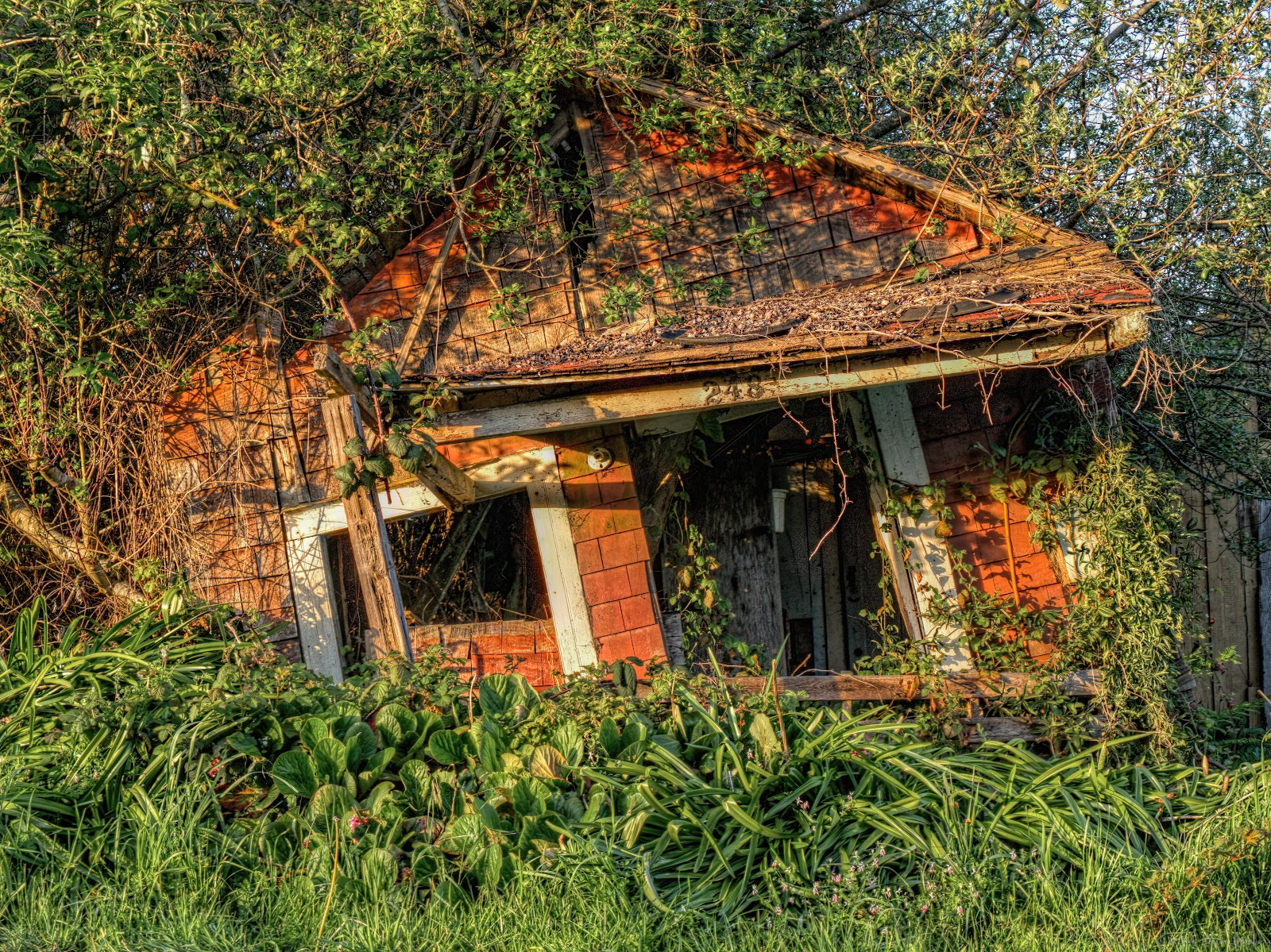 Overgrown dilapidated house