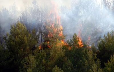ΚΟΝΙΤΣΑ-Φωτιά σε πευκοδάσος στον Αμάραντο