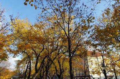 Beautiful autumn leaves at Bratislava Slovakia