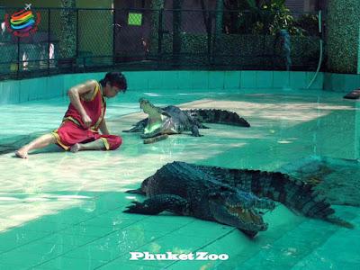 Crocodiles Show - Phuket Zoo