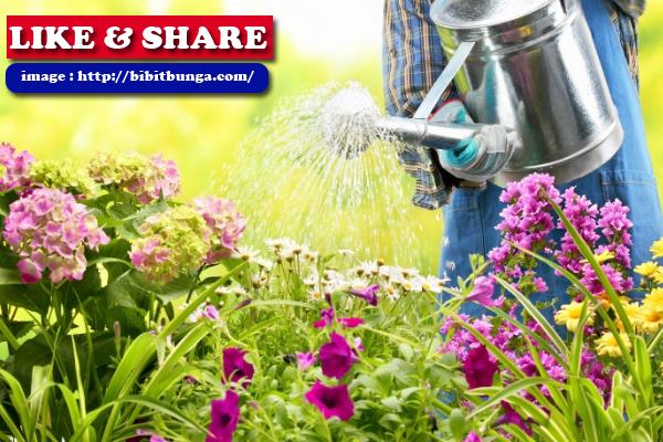 Tips Perawatan Bunga