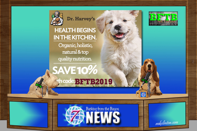 BFTB NETWoof News Save 10% with our ambassador code BFTB2019