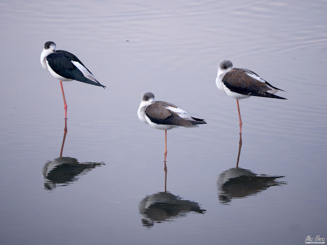 Three Stilts