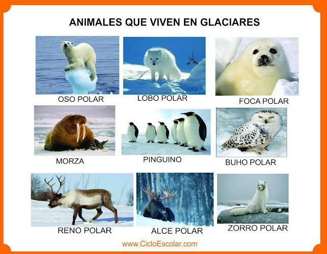 Animales que viven en los polos - Glaciares