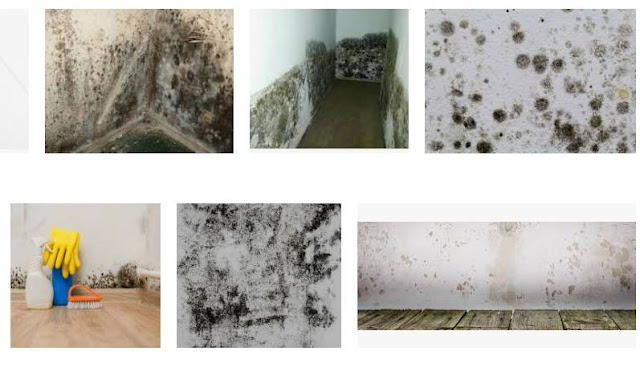 How To Identify Black Mold In Your House & Shower