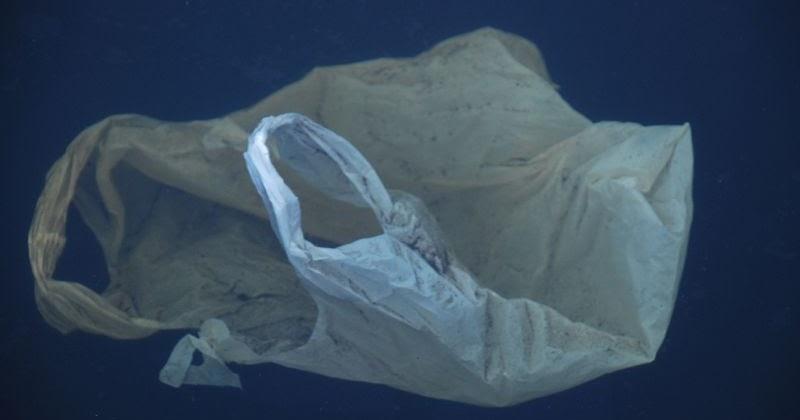 Plastic Bag - cover