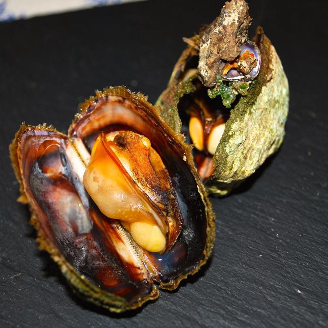 Dondoli Molluschi