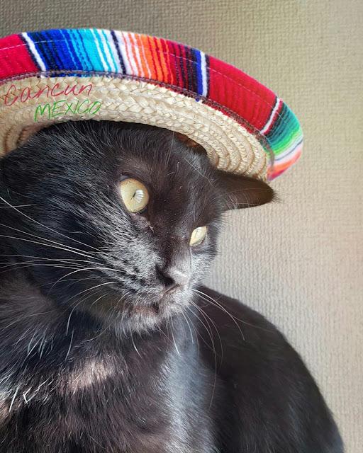 Kumpulan foto kucing hitam lucu dan menggemaskan