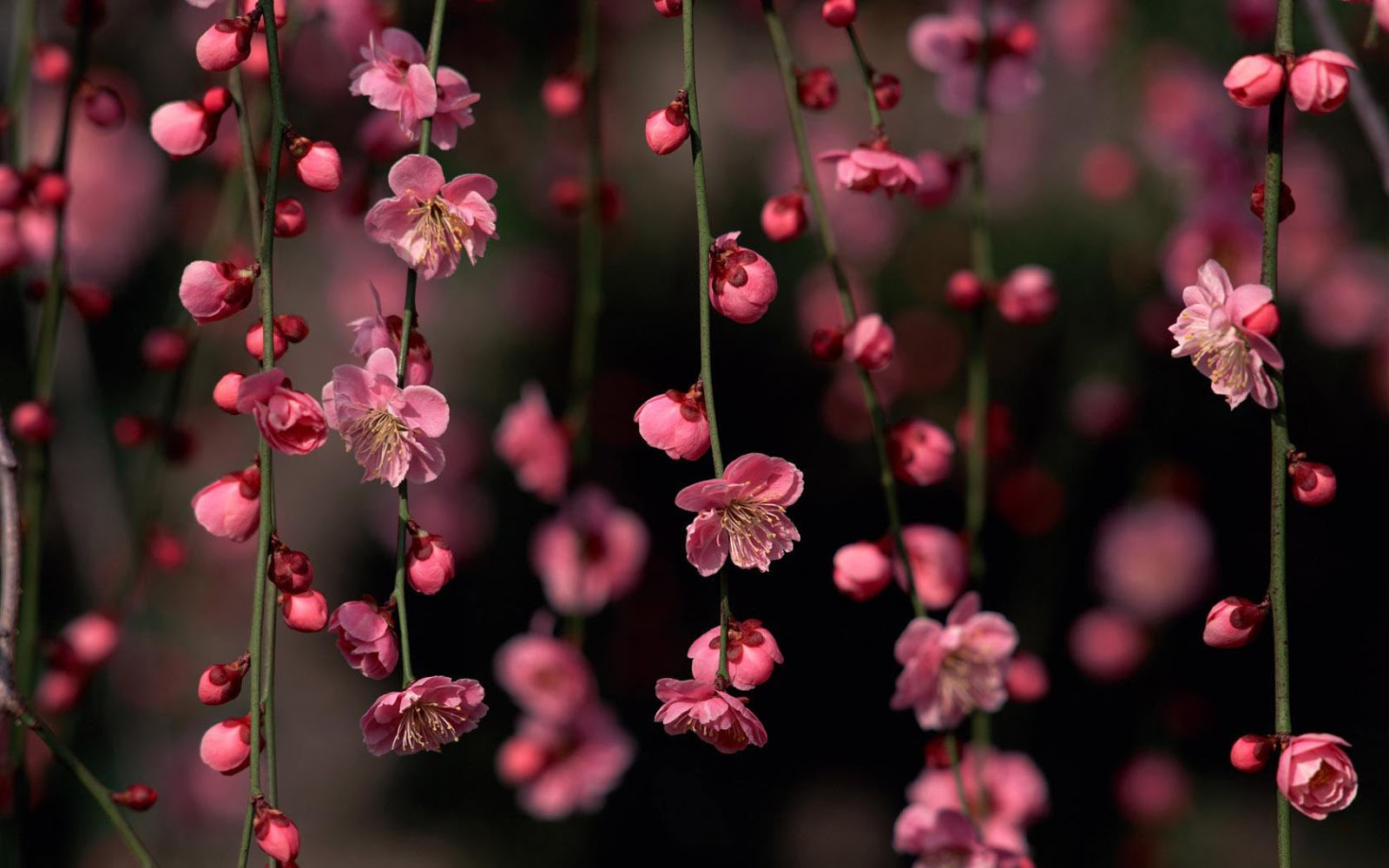 Popular   Wallpaper Home Screen Spring - Spring%2BHD%2BWallpapers%2B%252812%2529  Collection_4818.jpg
