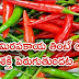 Amazing Benefits Of Chillies