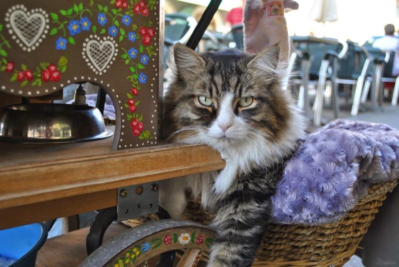 Femme à chats, czyli idiomy z kotami