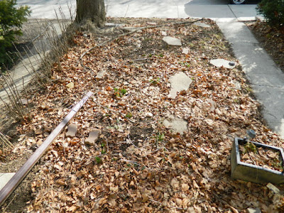 Davisville Mount Pleasant East Spring Front Garden Cleanup Before by Paul Jung Gardening Services a Toronto Gardening Company