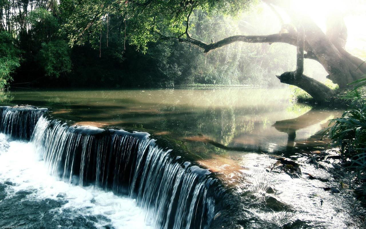 amazon nature wallpaper - photo #3