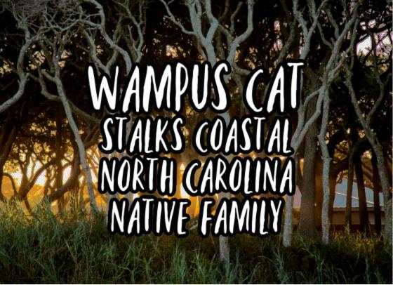 Wampus Cat Stalks Coastal North Carolina Native Family