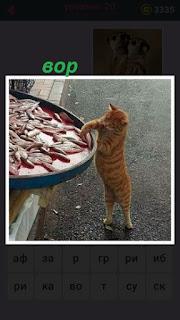 655 слов кот ворует рыбу с подноса встав на задние лапы 20 уровень