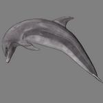dolphin in spanish