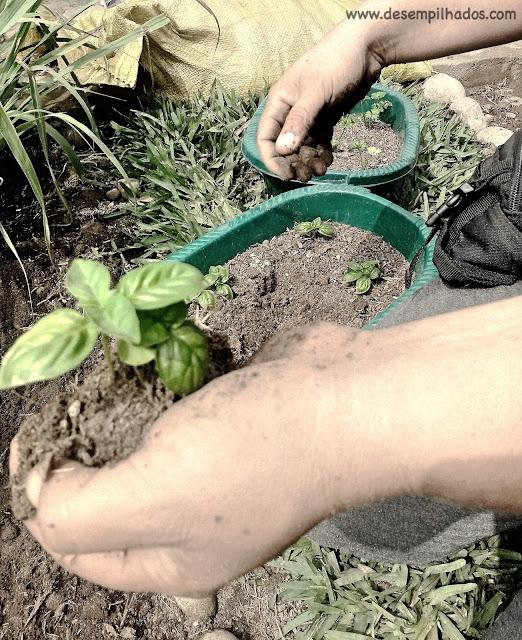 Curso de horta comestivel em Lima no Peru. Aprender a plantar organico