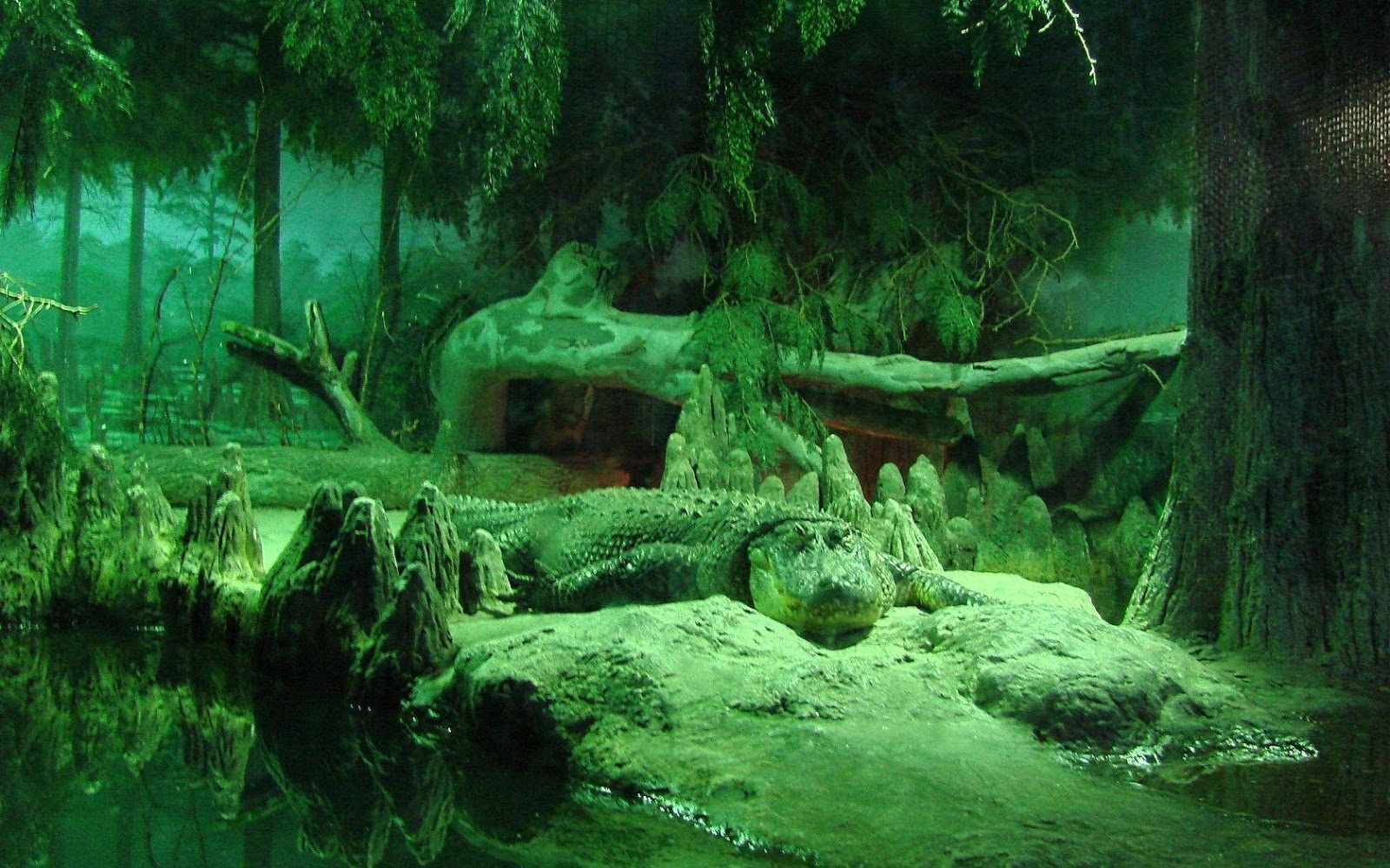 Alligator Wallpapers HD wallpapers