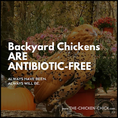 "Chicken keepers should not be shamed into avoiding antibiotic use when medically necessary as determined by a veterinarian for fear of being judged by some contrived standard of what is ""natural."""