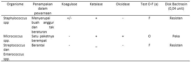 Bakteri Staphylococus sp.pada Hewan (Mikrobiologi)