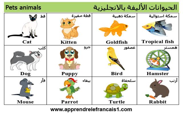 اسماء الحيوانات الاليفة بالانجليزية