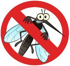 Fever from Dengue Dengi Dengee Mosquito