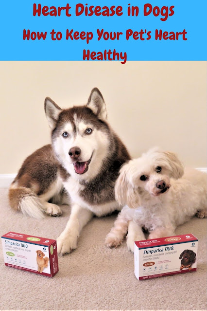 How to keep a dog's heart healthy. Pet heart health. Heart health for dogs and cats