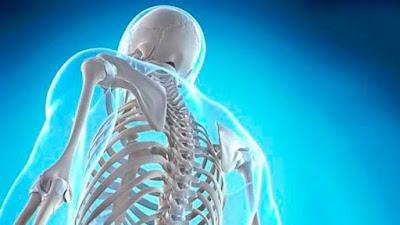 Esqueleto humano cantidad huesos