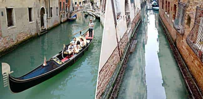 Fish move under the water of the Venice canals