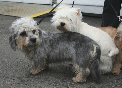 Dandie Dinmont Terriers: Ten Things You May Not Know About Them
