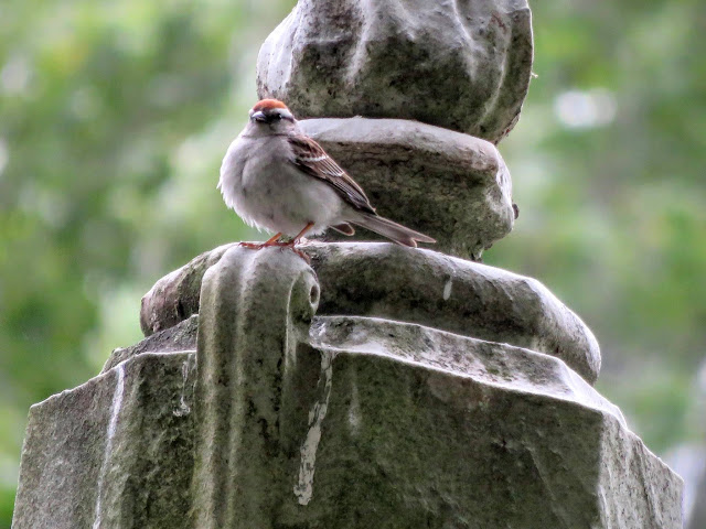 Bird on a grave at Mount Auburn Cemetery in Cambridge, Massachusetts